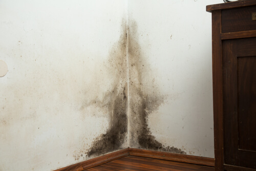 mold in the corner
