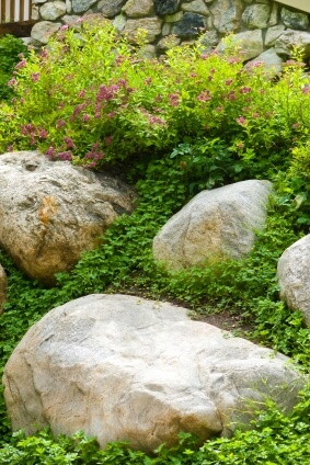 Rock gardens and native plants