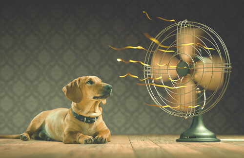 dog cooling down by fan (2)