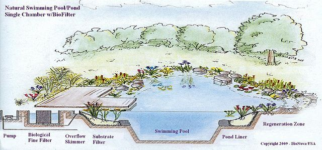 natural swimming pool plan - Natural Swimming Pool Designs