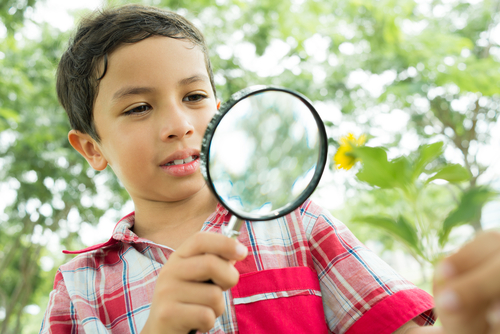 boy and magnifying glass discovering nature