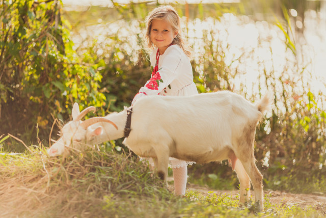 little girl and goat